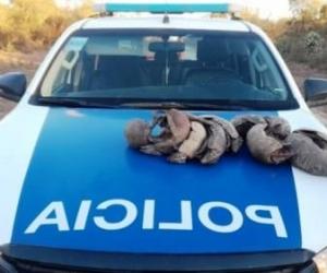 POLICÍA RURAL Y AMBIENTAL