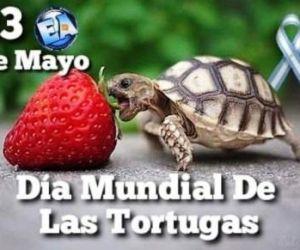 DÍA DE LA TORTUGA